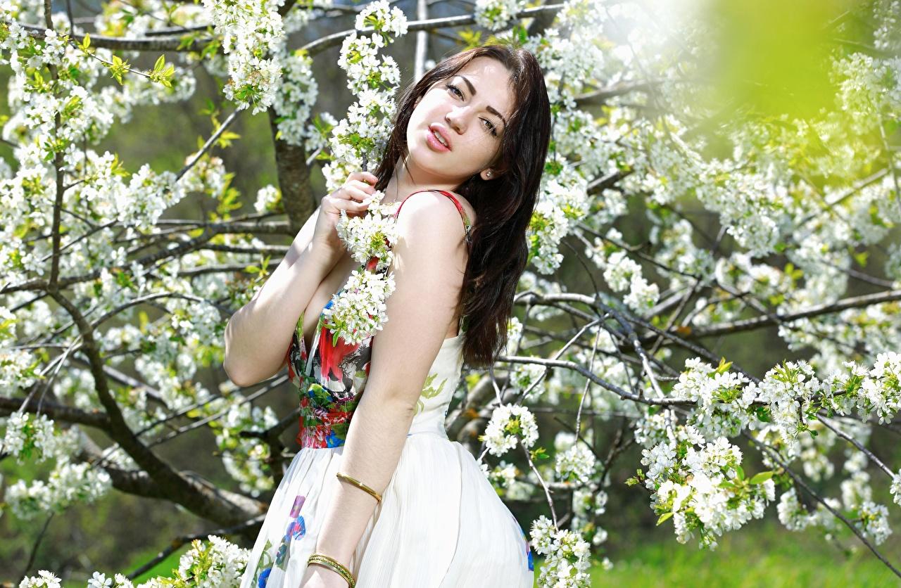 Картинка Брюнетка Весна Девушки Взгляд Платье Цветущие деревья весенние смотрит