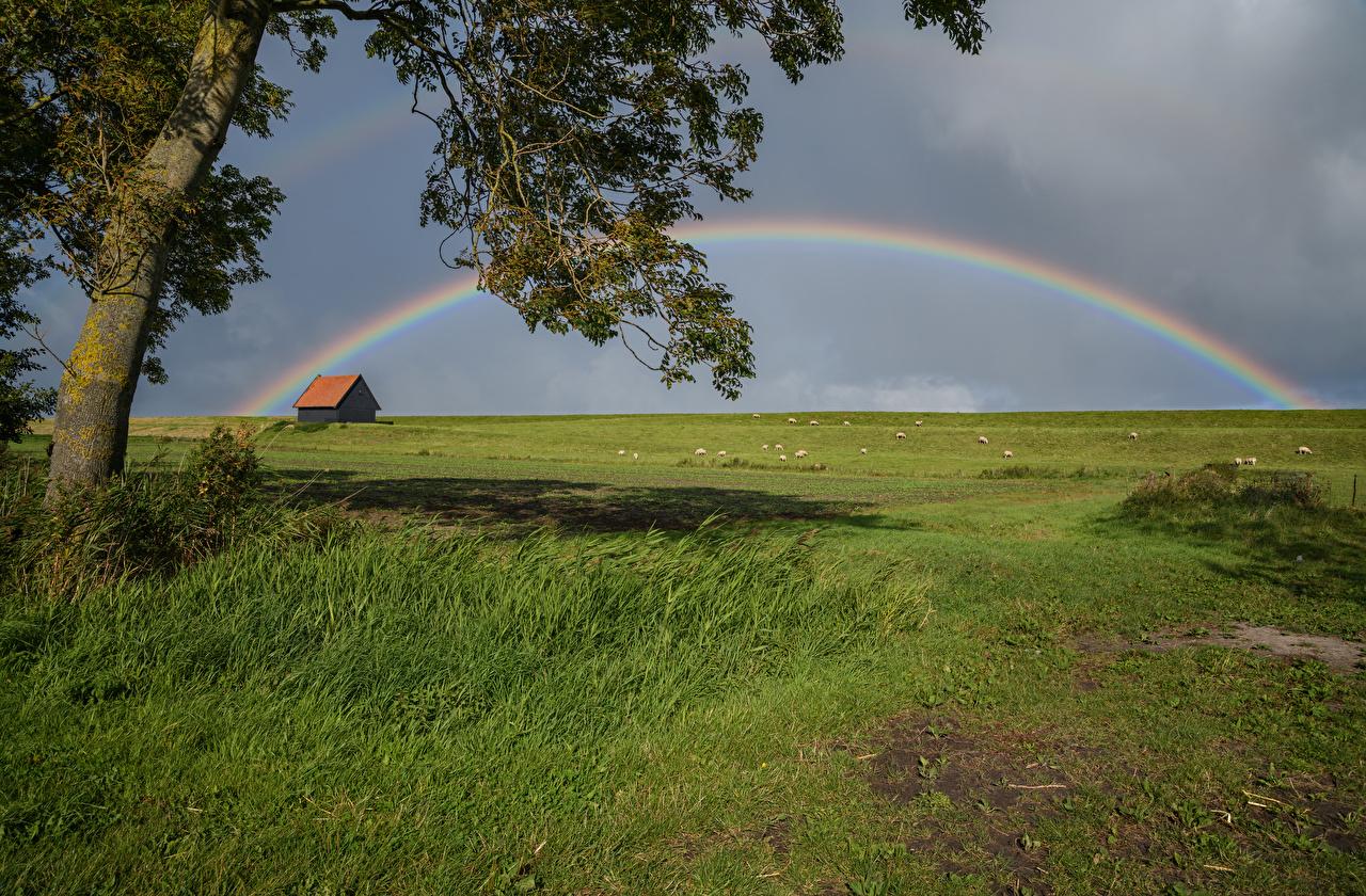 Фото Нидерланды Kreileroord радуги Природа Луга Трава голландия Радуга траве