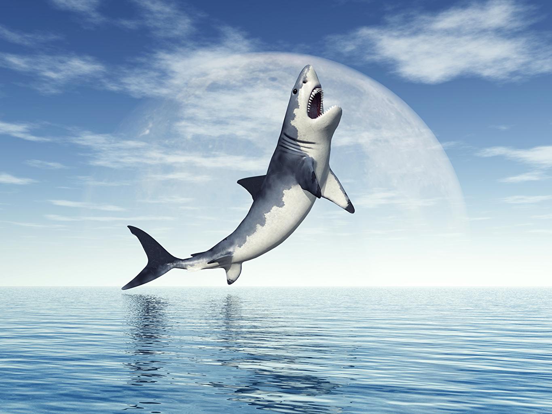 Фотография Акулы Море 3D Графика Небо Животные