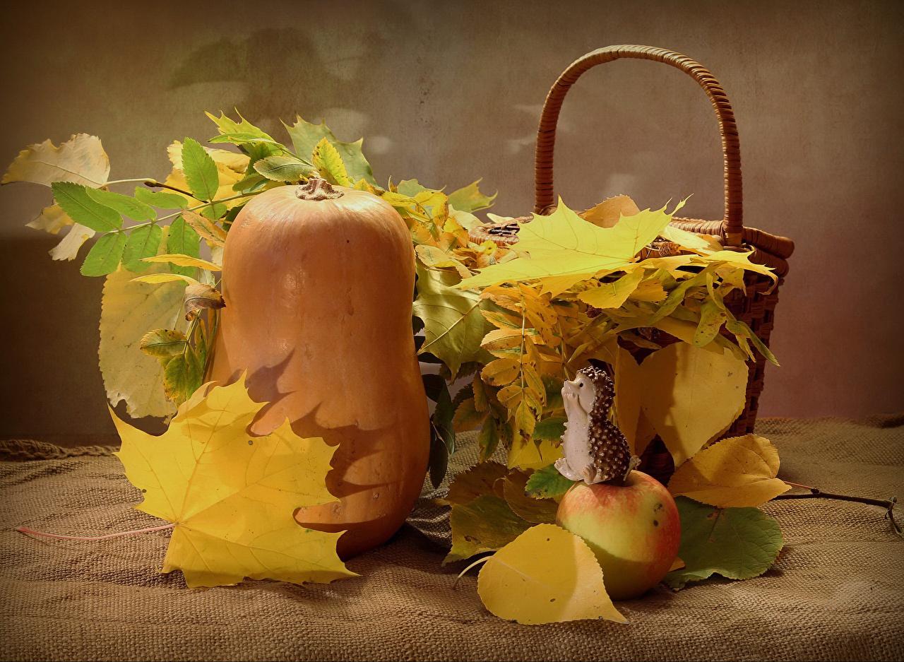 Фотографии Ежики Листва Тыква осенние Яблоки Еда Ежи лист Листья Осень Пища Продукты питания