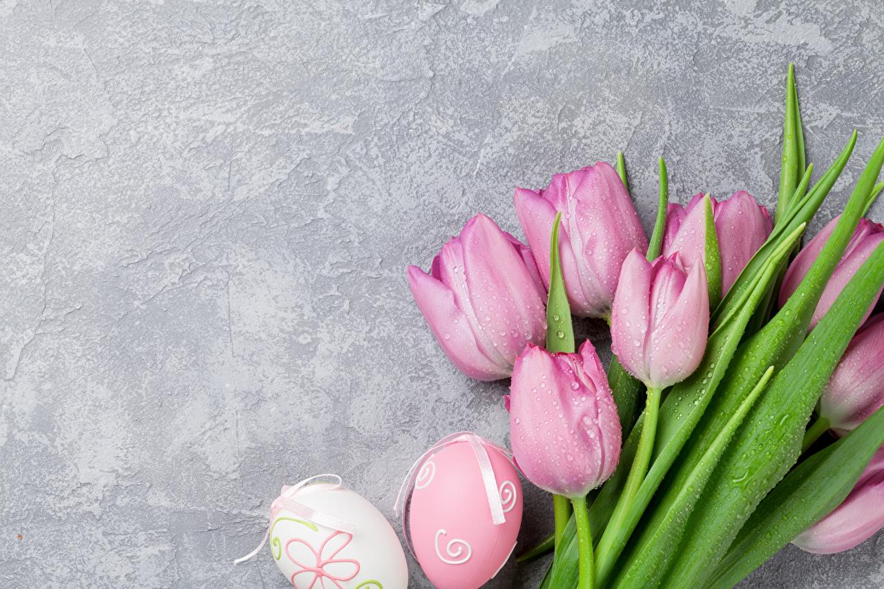 Фотографии Пасха Яйца Розовый Тюльпаны Цветы Праздники