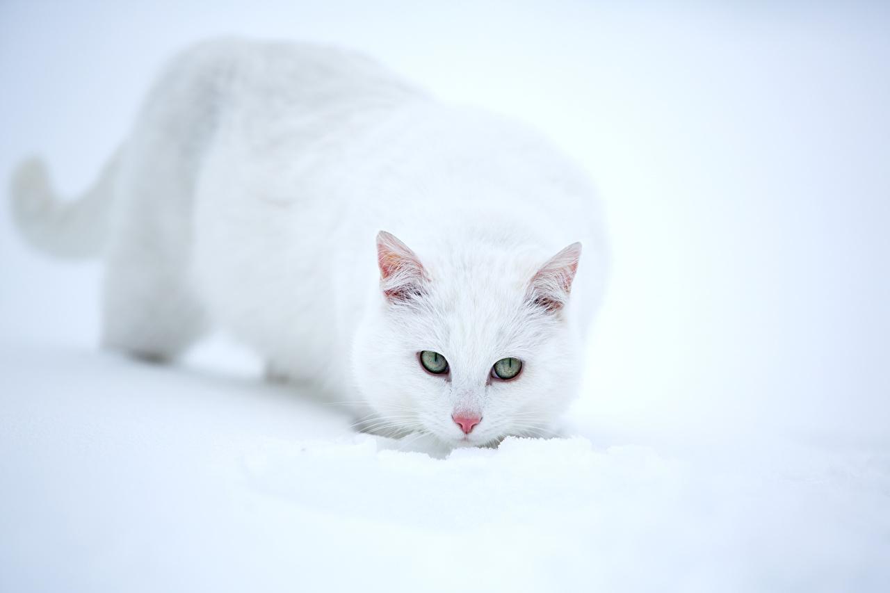обои кот зимой