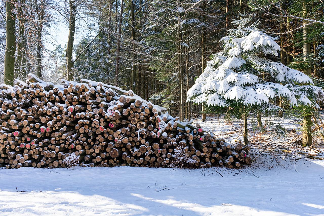 Фотография Ель Зима бревно Природа Леса снега ели зимние Бревна лес Снег снегу снеге