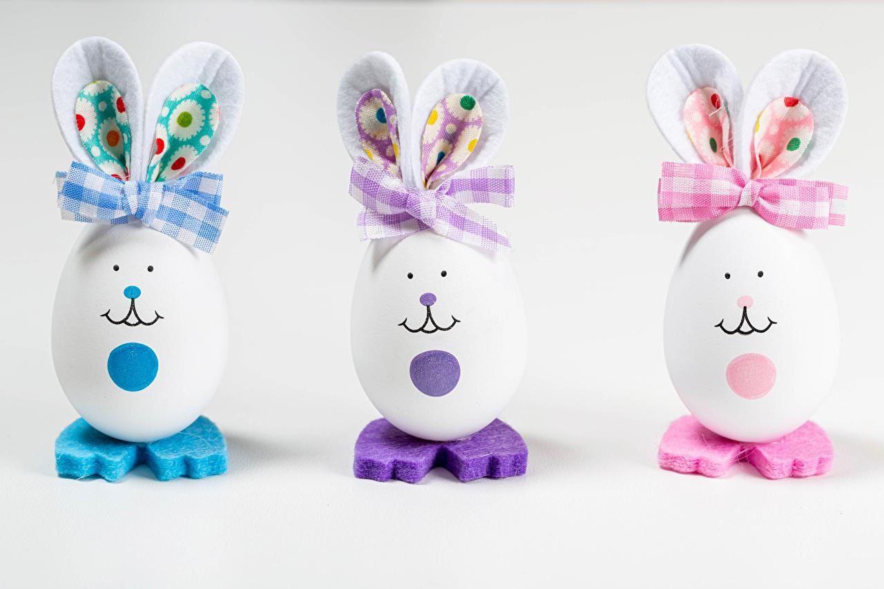 Фотография Пасха кролик яиц креативные Трое 3 бантики Продукты питания Серый фон Кролики яйцо Яйца яйцами Креатив оригинальные три Еда бант Пища втроем Бантик сером фоне