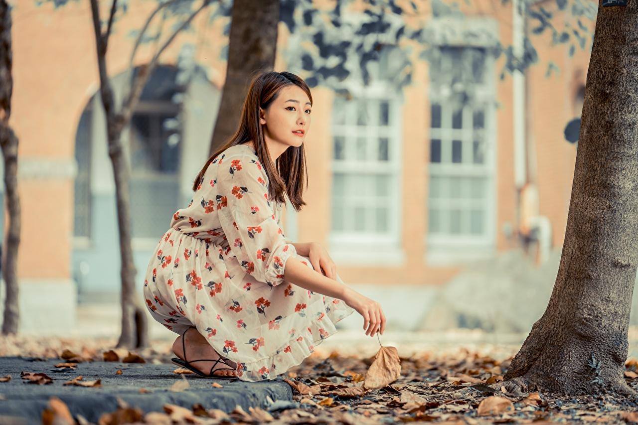 Картинка лист шатенки боке Осень девушка азиатки платья Листва Листья Шатенка Размытый фон осенние Девушки молодая женщина молодые женщины Азиаты азиатка Платье