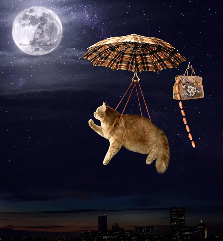 Картинки коты Смешные Луна Сосиска Креатив Зонт Сумка ночью летящий животное кот кошка Кошки смешной смешная забавные луны луной креативные оригинальные Ночь Полет летят летит в ночи зонтик Ночные зонтом Животные