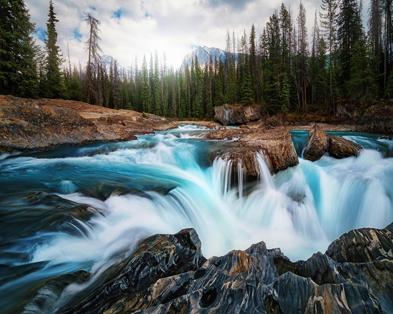 Фотографии Канада Природа Водопады Леса Пейзаж река Камни лес Реки речка Камень