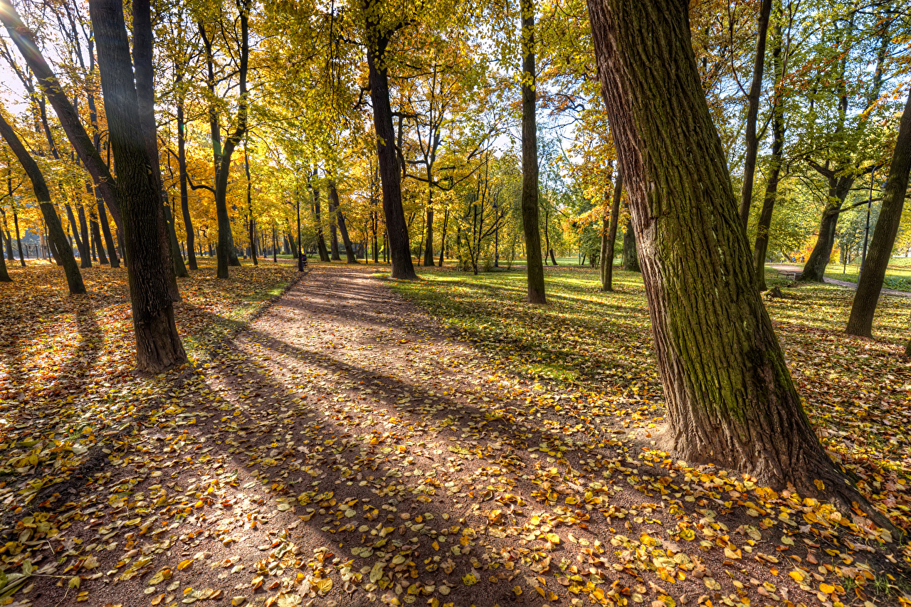 Картинки Санкт-Петербург Листья Россия Park Ekaterinhof Природа осенние Парки деревьев лист Листва Осень парк дерево дерева Деревья