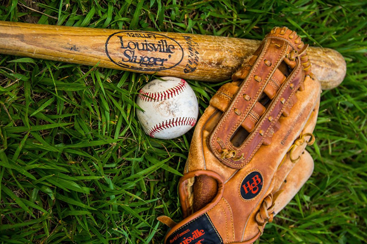 Фото Перчатки Бейсбольная бита Спорт Мяч траве перчатках бейсбольной битой спортивные спортивная спортивный Трава Мячик