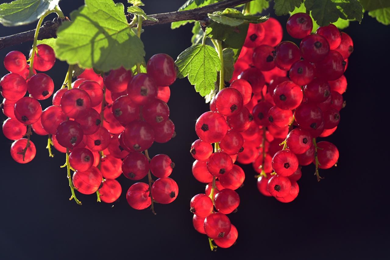 Картинки Листья красные Природа Смородина Ягоды Много лист Листва красная Красный красных
