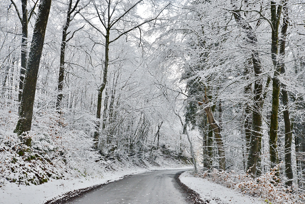 Фото Зима Природа Леса Снег Дороги дерево зимние лес снеге снега снегу дерева Деревья деревьев