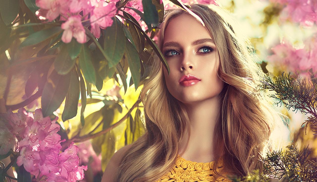 Фото Блондинка Красивые Лицо Девушки смотрит Взгляд