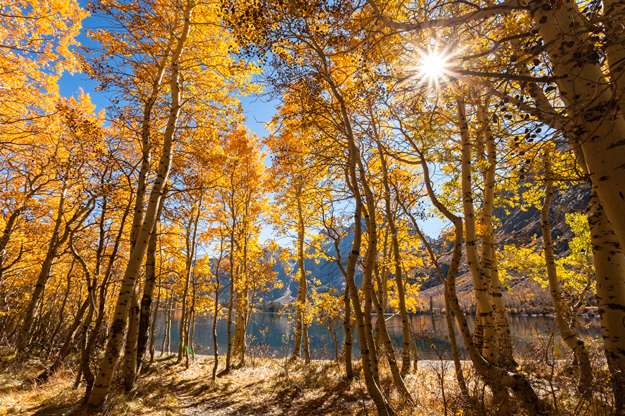 Картинка Лучи света Калифорния США June Lake Природа осенние Озеро дерево калифорнии штаты америка Осень дерева Деревья деревьев