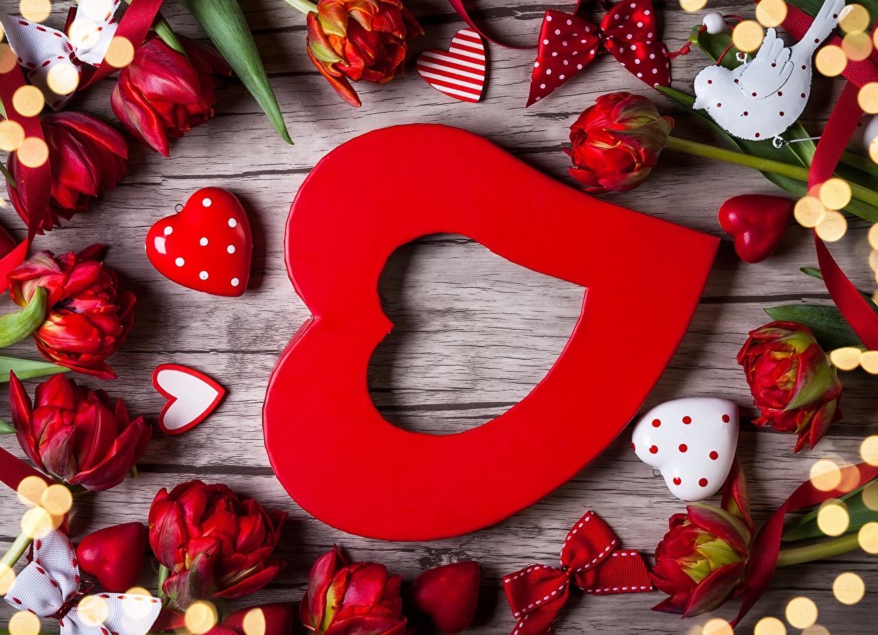 Фотография День всех влюблённых сердечко Тюльпаны цветок День святого Валентина серце сердца Сердце тюльпан Цветы
