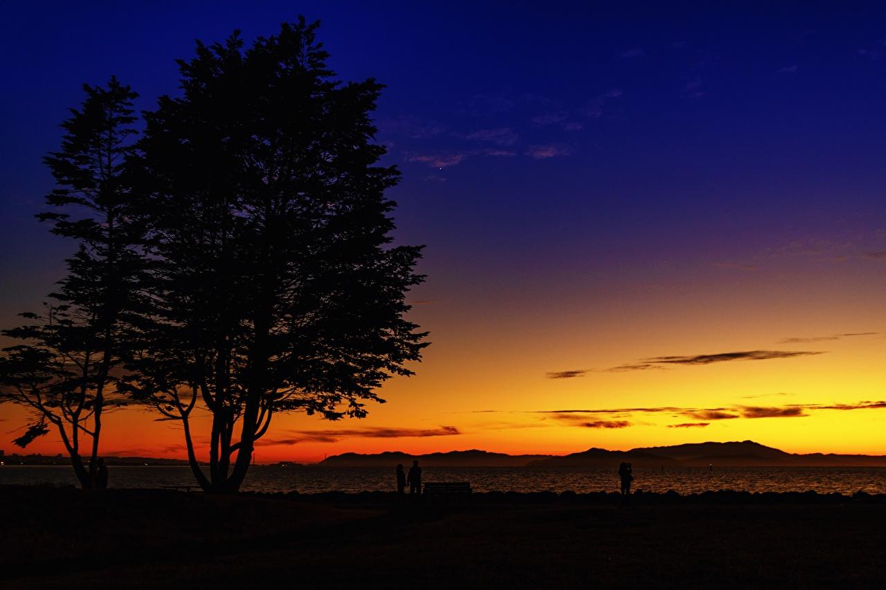 Фотография Калифорния штаты силуэта Emeryville, Alameda County Природа рассвет и закат дерево калифорнии США америка Силуэт силуэты Рассветы и закаты дерева Деревья деревьев
