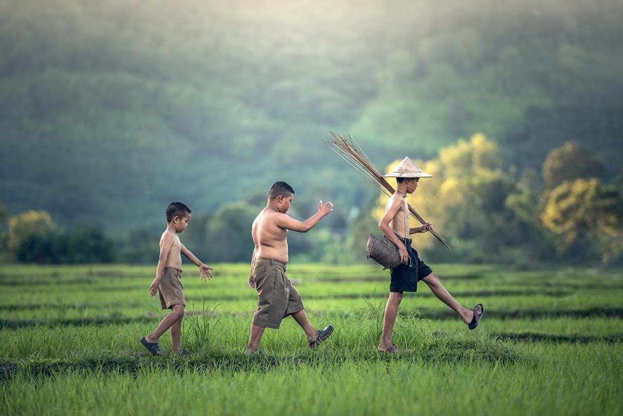 Обои Мальчики Дети Шляпа гуляет Азиаты Трава Шорты Трое 3 Ребёнок идет Прогулка втроем