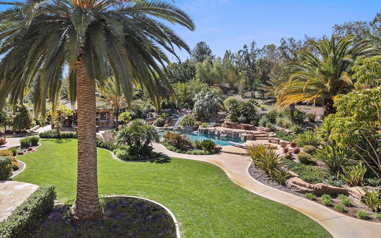 Фотографии Калифорния штаты Trabuco Canyon Природа парк Пруд пальма газоне кустов калифорнии США америка Парки пальм Пальмы Газон Кусты