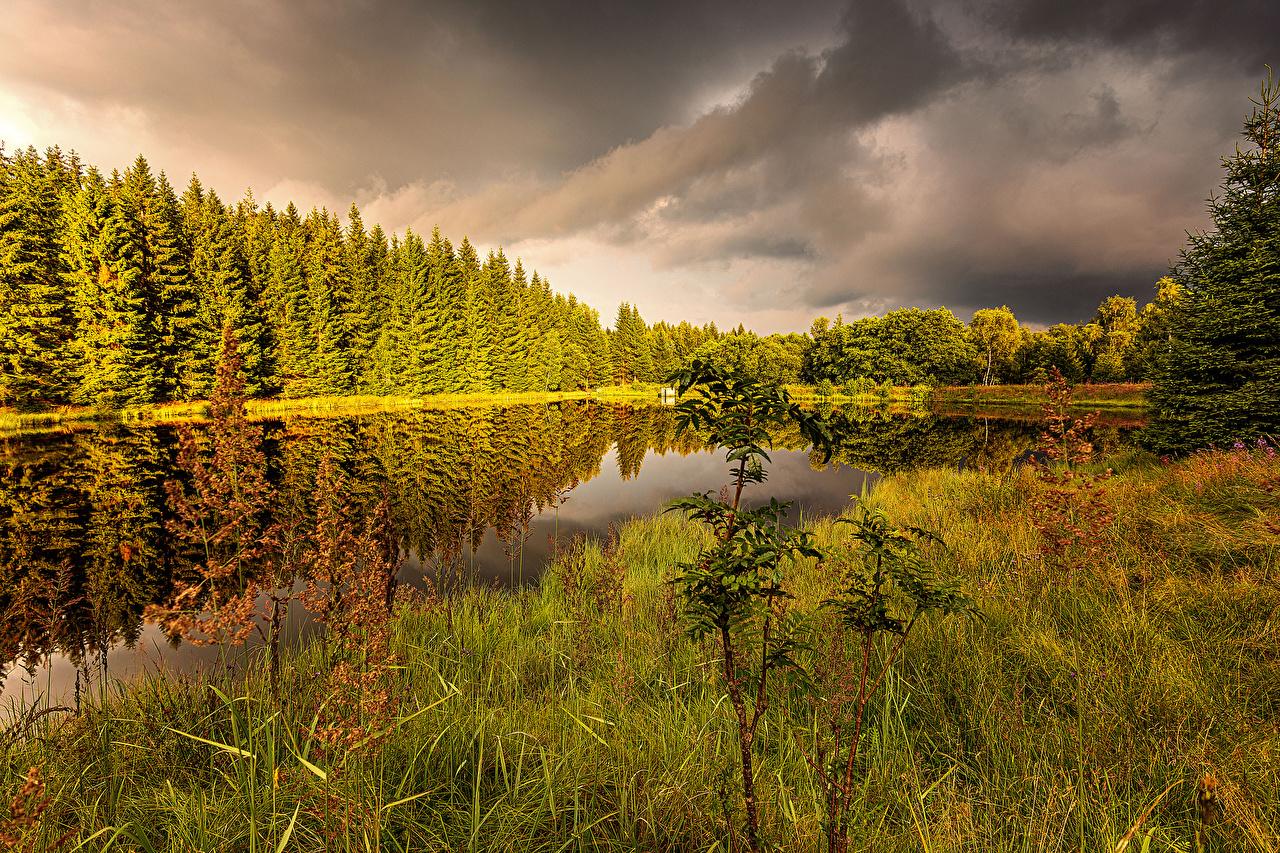 Обои для рабочего стола Чехия Ústecký kraj осенние Природа Леса Пруд Трава Осень лес траве