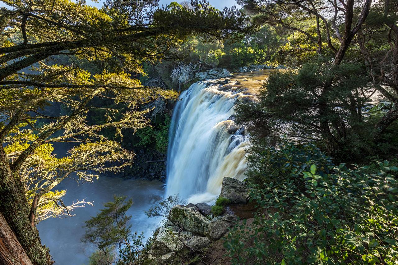 Фотография Новая Зеландия Rainbow Falls Kerikeri Утес Природа Водопады ветвь Скала Ветки