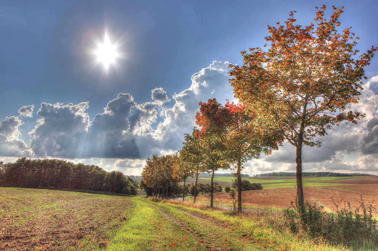 Фотография Германия Illerich солнца Природа осенние Небо Поля деревьев Осень Солнце дерево дерева Деревья