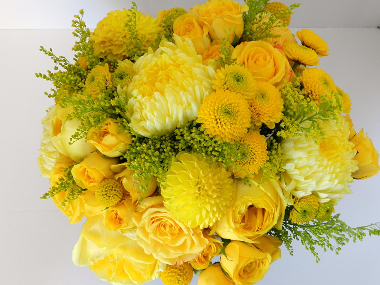 Весенние цветы  Обои для рабочего стола