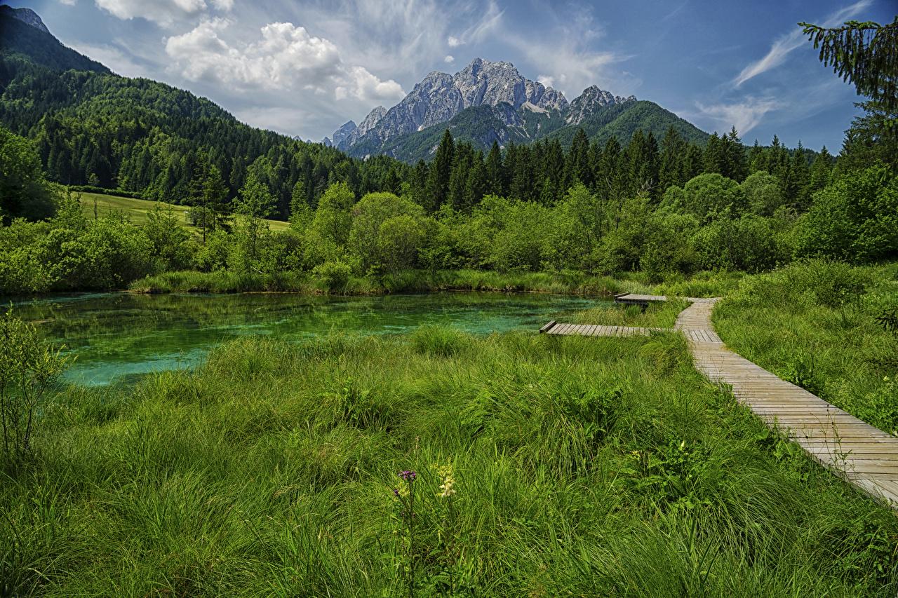 Картинка Словения Zelenci Lake Горы Природа тропинка лес Озеро траве гора тропы Тропа Леса Трава