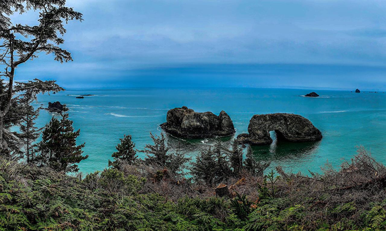 Фото америка Carpenterville Oregon Ель скалы Природа Залив Побережье США штаты ели Утес скале Скала берег заливы залива