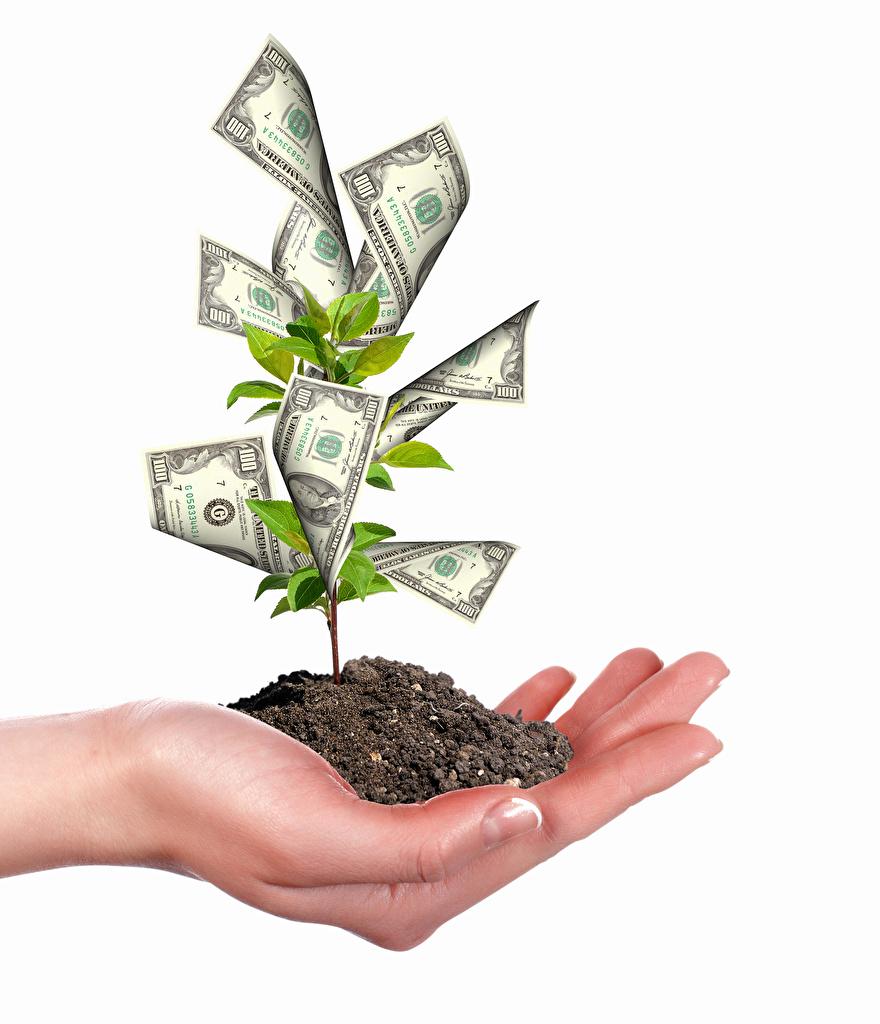 Картинки Банкноты Почва оригинальные Руки Деньги Деревья Белый фон Купюры земля Креатив