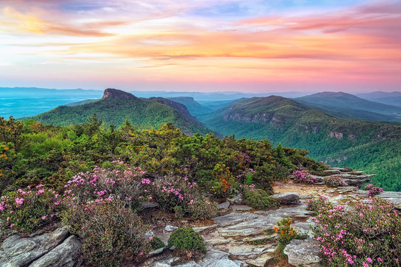 Картинка США Roan Mountain Rhododendron Gardens Горы Природа Парки Пейзаж кустов штаты америка гора парк Кусты