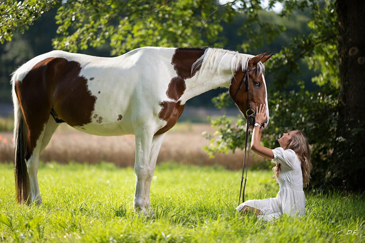 Картинки Лошади улыбается Marion and Epalino Девушки Сидит траве Животные лошадь Улыбка девушка молодая женщина молодые женщины сидя Трава сидящие животное