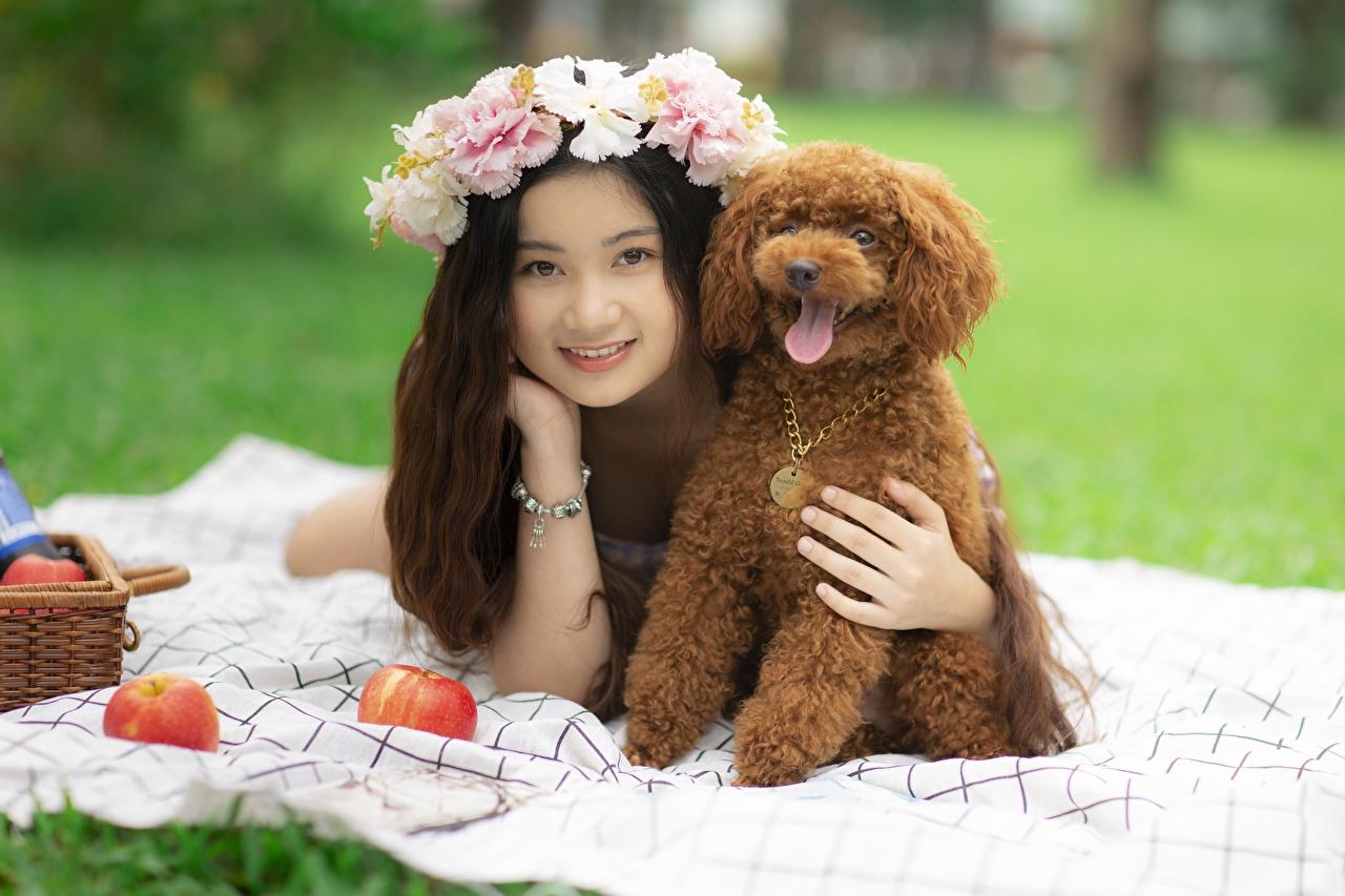 Фотографии Пудель Собаки улыбается Лежит венком Девушки азиатки пуделя пудели собака Улыбка лежа лежат лежачие Венок девушка молодая женщина молодые женщины Азиаты азиатка