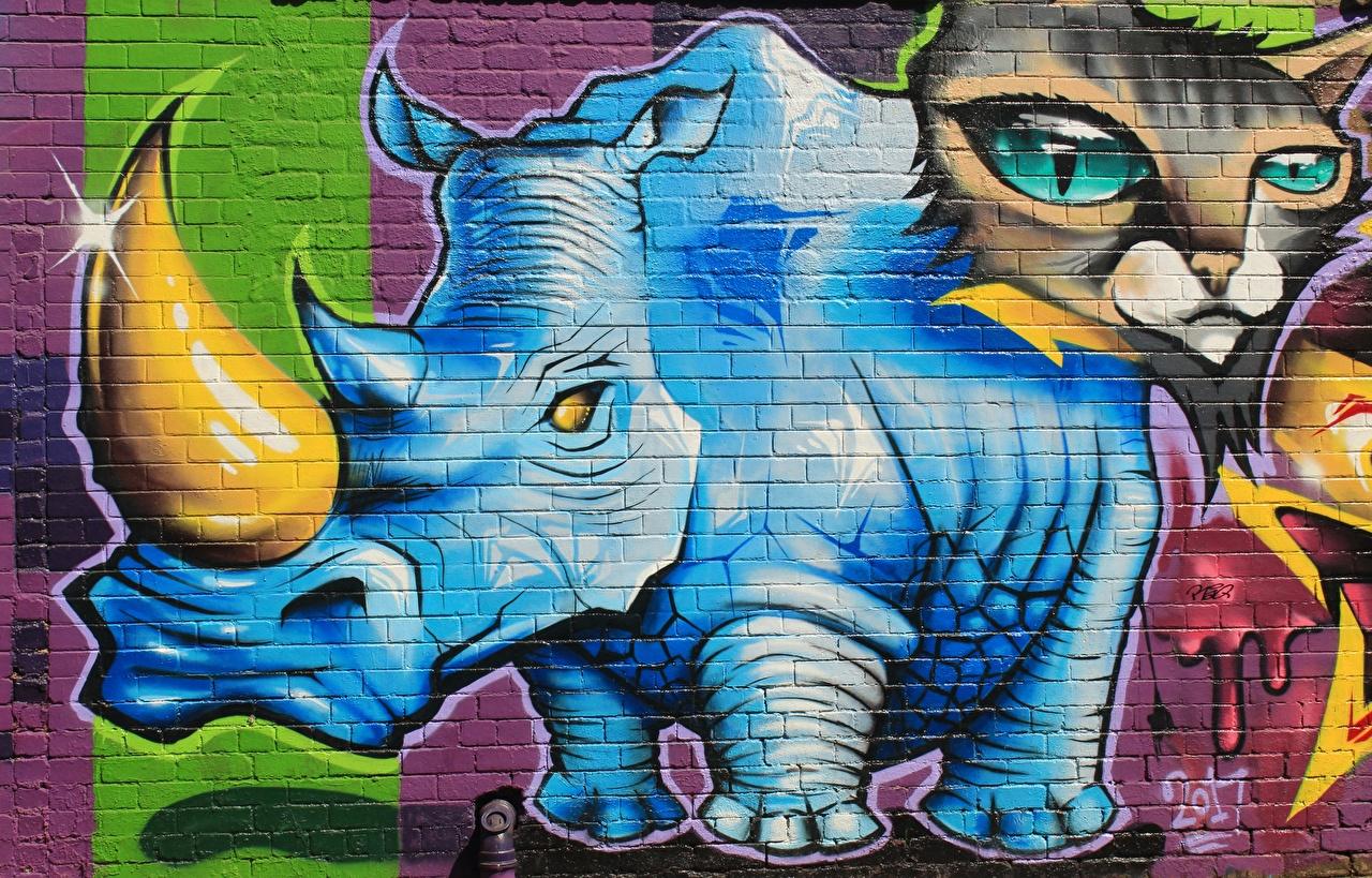 Фото коты Носороги с рогами Граффити стены Животные кот Кошки кошка Рога стене Стена стенка животное