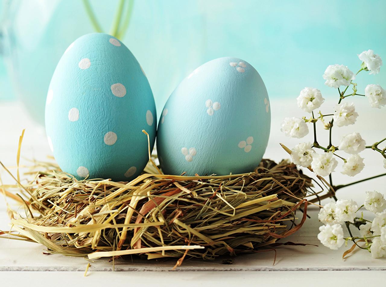 Фото Пасха яйцо два голубых Праздники яиц Яйца яйцами 2 две Двое вдвоем голубая голубые Голубой
