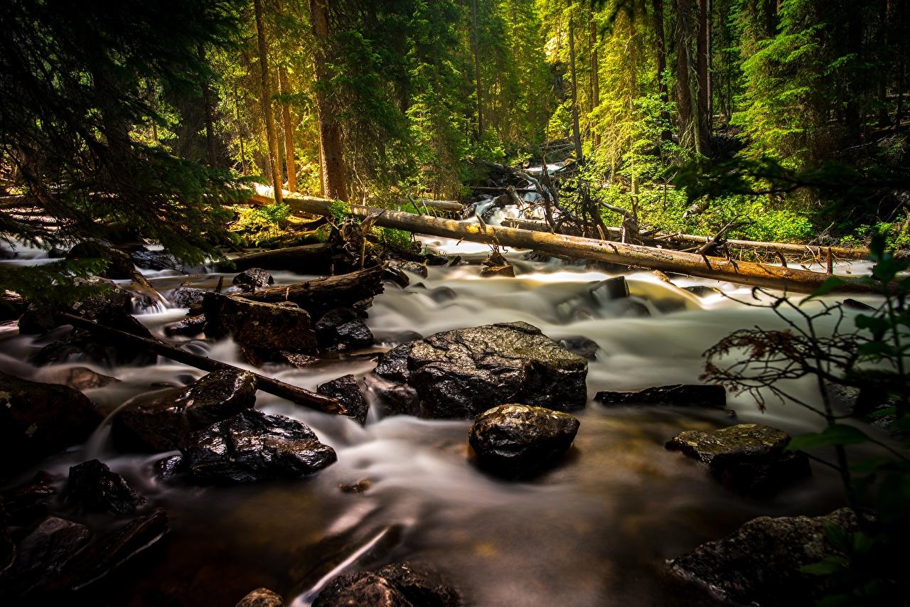 Картинка Ручей Природа Леса Камень ручеек лес Камни