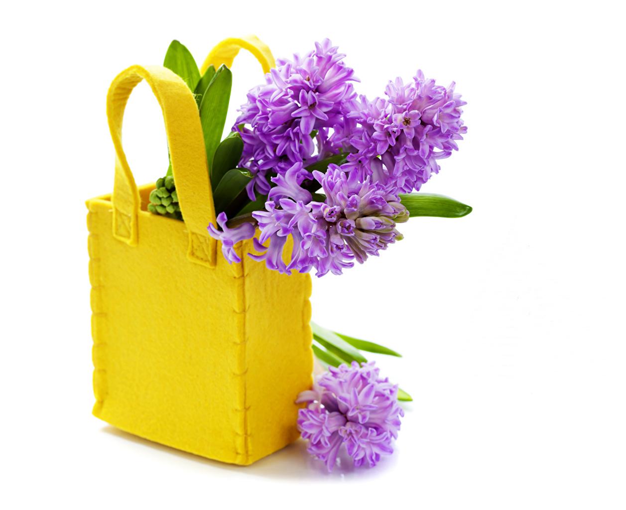 Фотография Фиолетовый Цветы Сумка Гиацинты Белый фон