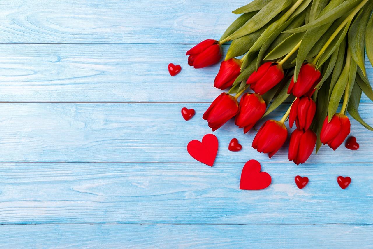 Картинки День святого Валентина Сердце Тюльпаны цветок Шаблон поздравительной открытки Доски День всех влюблённых серце сердца сердечко тюльпан Цветы