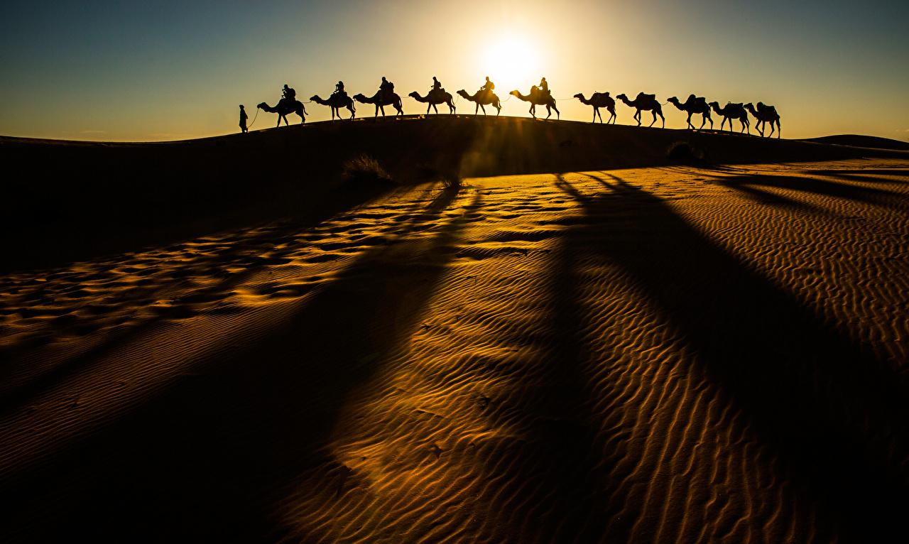 Картинка Верблюды Силуэт Природа Пустыни Песок силуэты силуэта песке песка