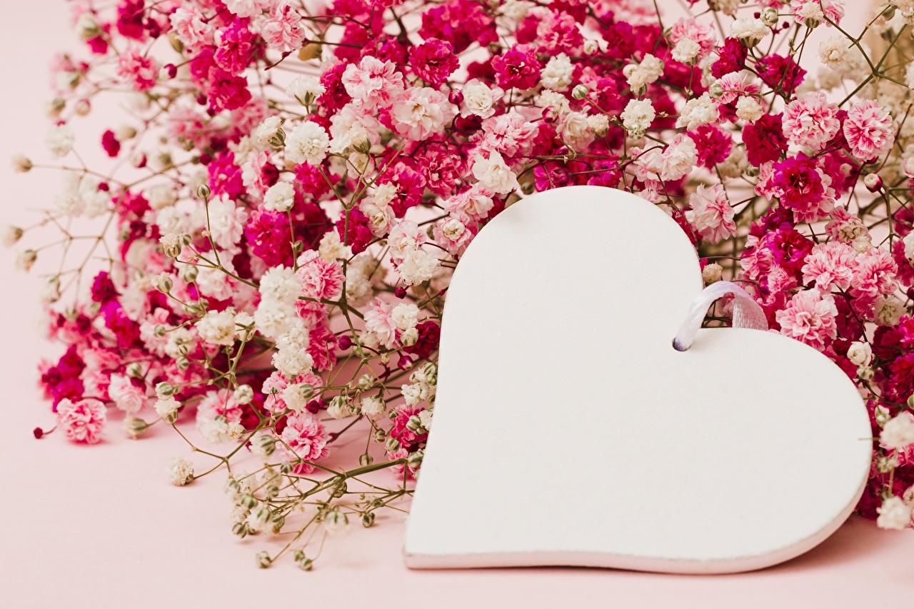 Картинка День святого Валентина серце Цветы Шаблон поздравительной открытки День всех влюблённых Сердце сердца сердечко цветок