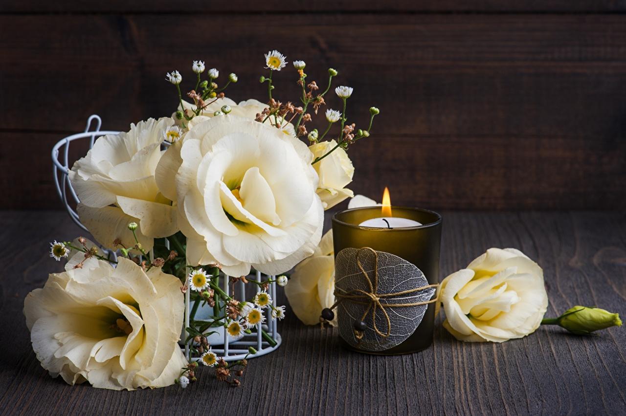 Фото Цветы Стакан Эустома Свечи цветок стакана стакане Лизантус