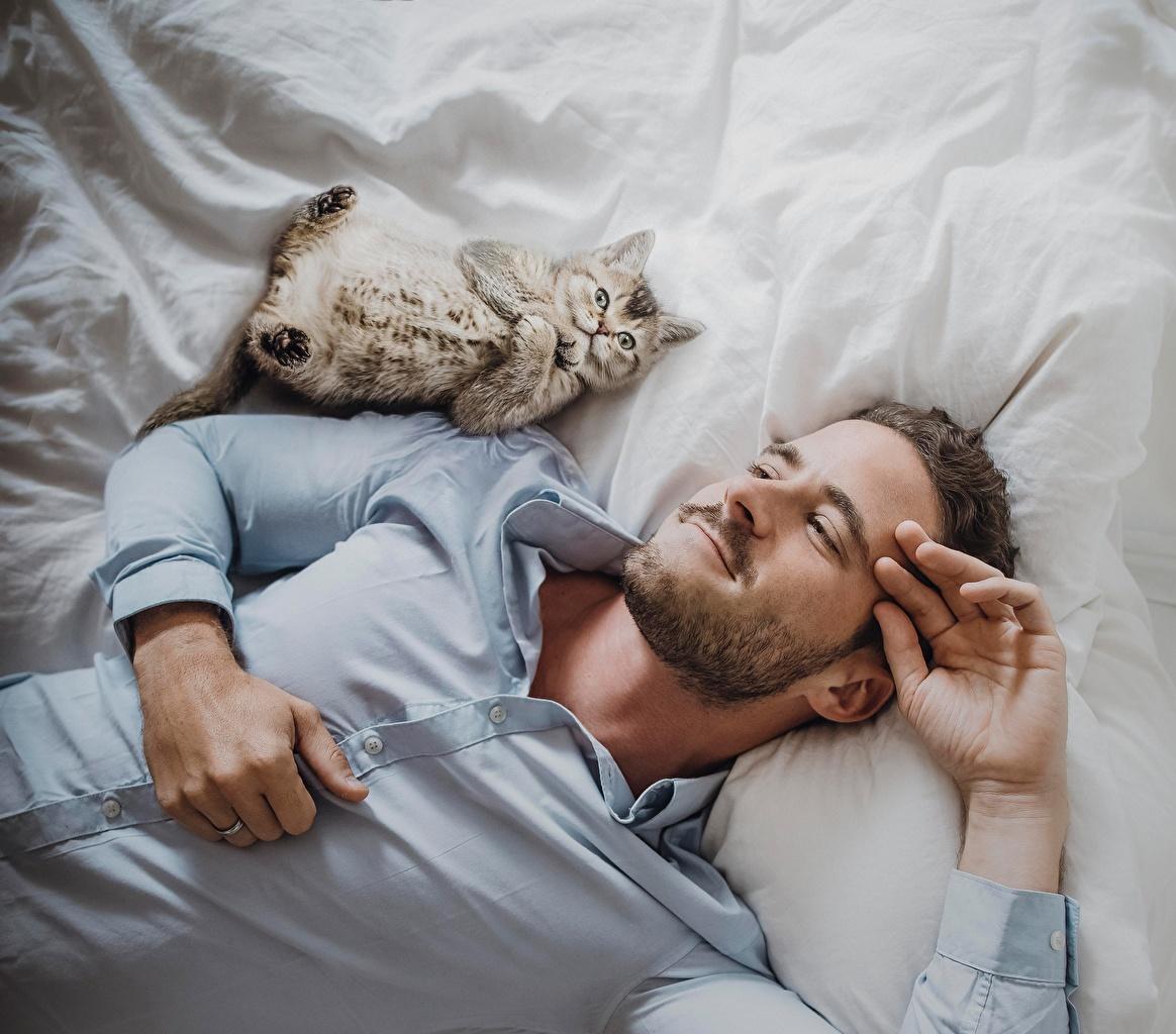 Фотография Кошки Мужчины улыбается Борода Рубашка Коты Улыбка бородой бородатые бородатый рубашки рубашке