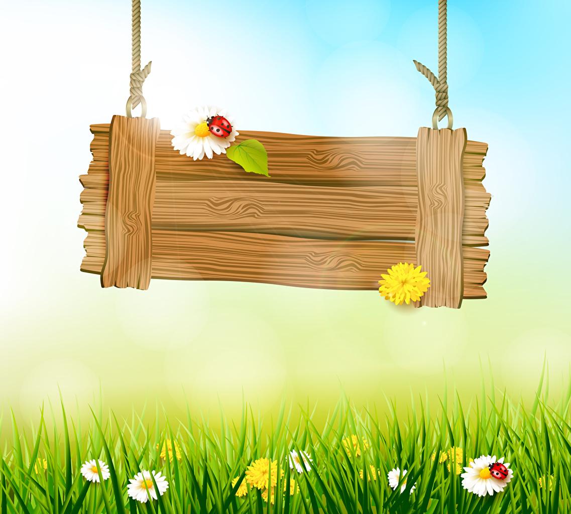 Картинка Божьи коровки Весна Природа Ромашки Трава Шаблон поздравительной открытки