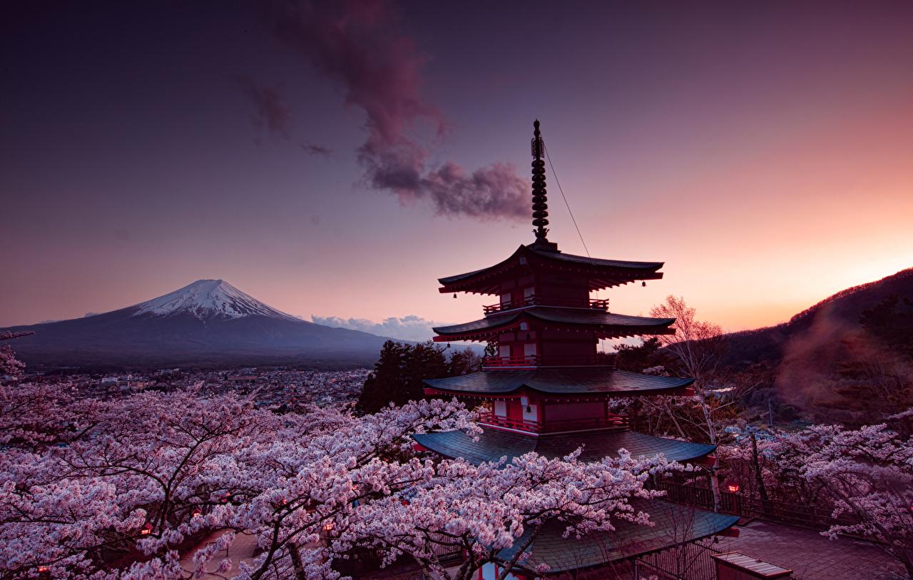 сакура: обои и картинки на рабочий стол, скачать бесплатно на ...