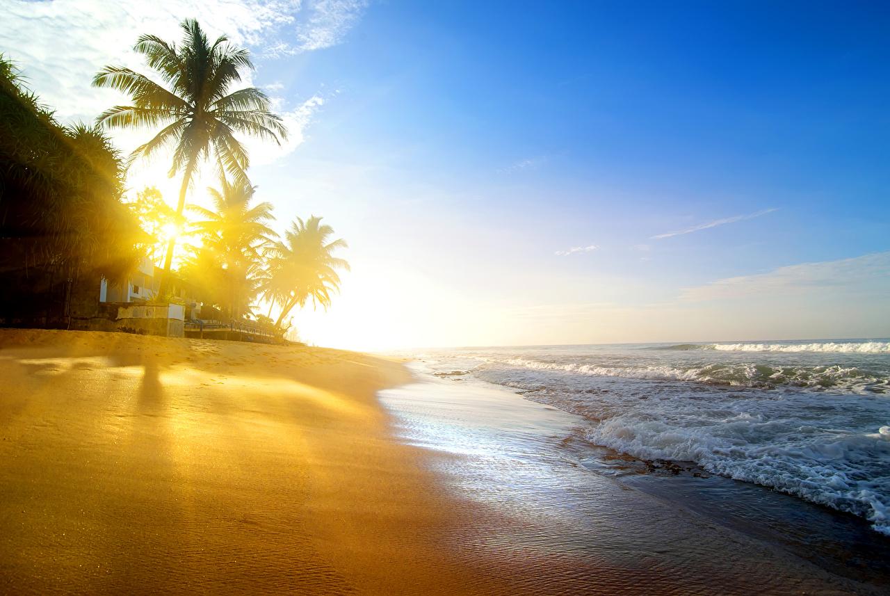 Фото Лучи света Пляж Природа Волны Пальмы Тропики Побережье берег