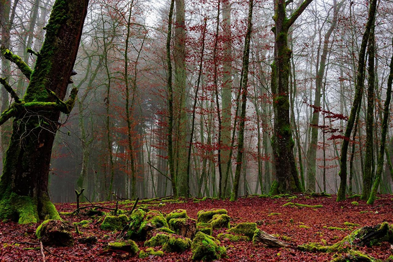 Обои для рабочего стола тумане Осень Природа Леса Мох дерево Туман тумана осенние лес мха мхом дерева Деревья деревьев