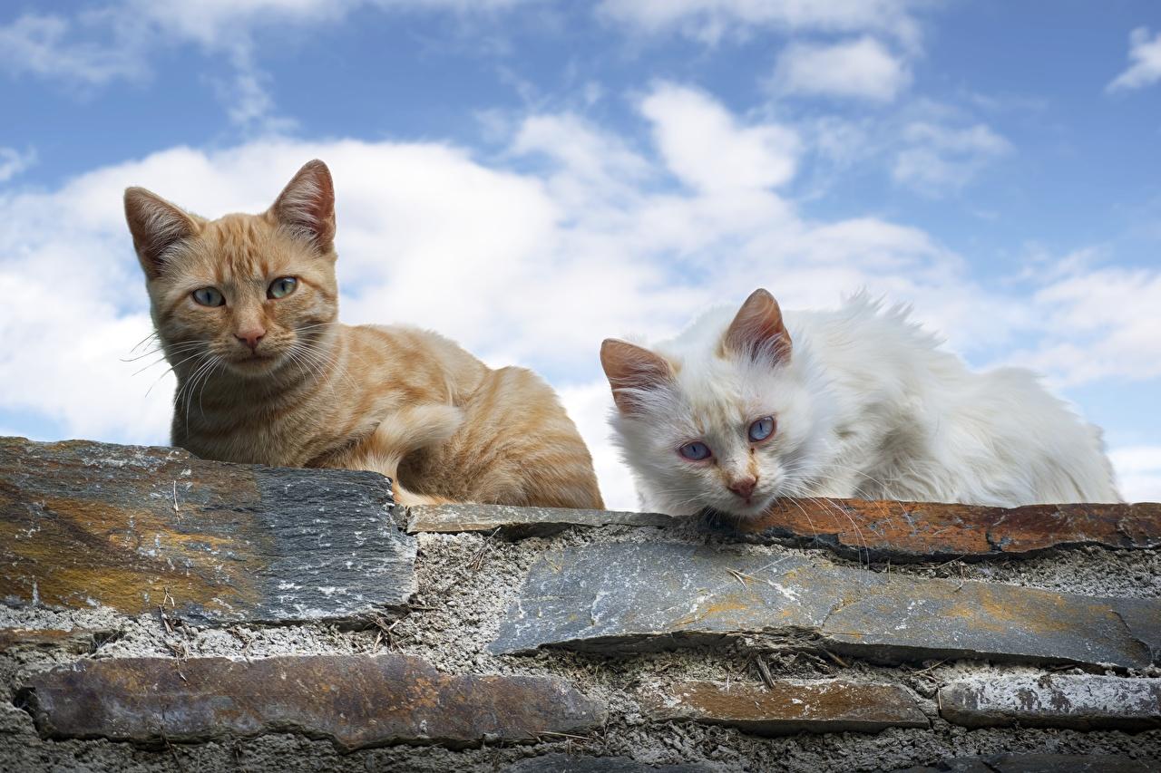 Фотография Кошки Двое смотрит Животные Коты 2 вдвоем Взгляд