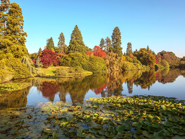 Фотография Листья Англия Sheffield Park Осень Природа Пруд парк деревьев лист Листва осенние Парки дерево дерева Деревья