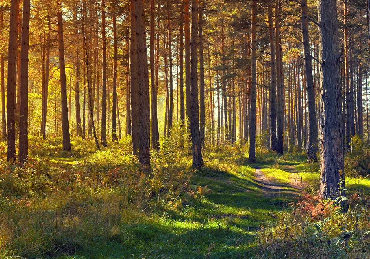 Фотография Природа тропинка Леса траве Деревья тропы Тропа Трава дерево дерева деревьев
