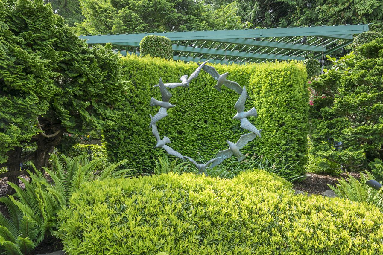 Фото Ванкувер птица Канада Butchart Gardens Природа парк кустов Скульптуры Дизайн Птицы Парки Кусты скульптура дизайна