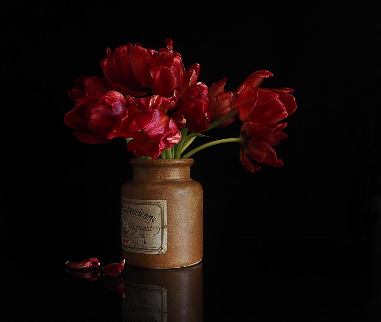 Фотографии Красный Тюльпаны лепестков Банка Цветы на черном фоне тюльпан красная красные красных Лепестки банке банки цветок Черный фон
