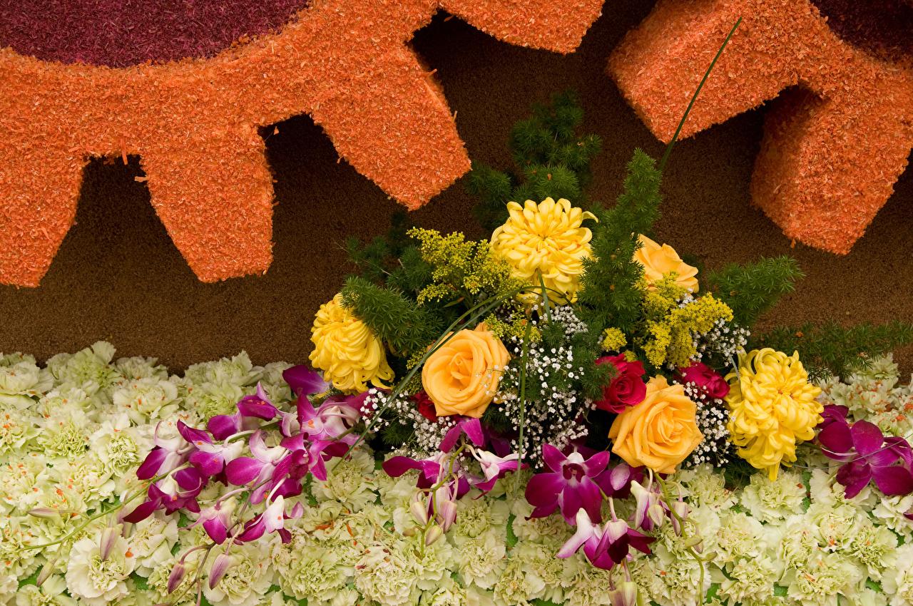 Обои Розы Орхидеи Цветы Хризантемы